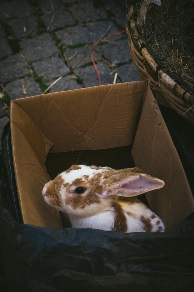 bunny_in market (1 of 1).jpg
